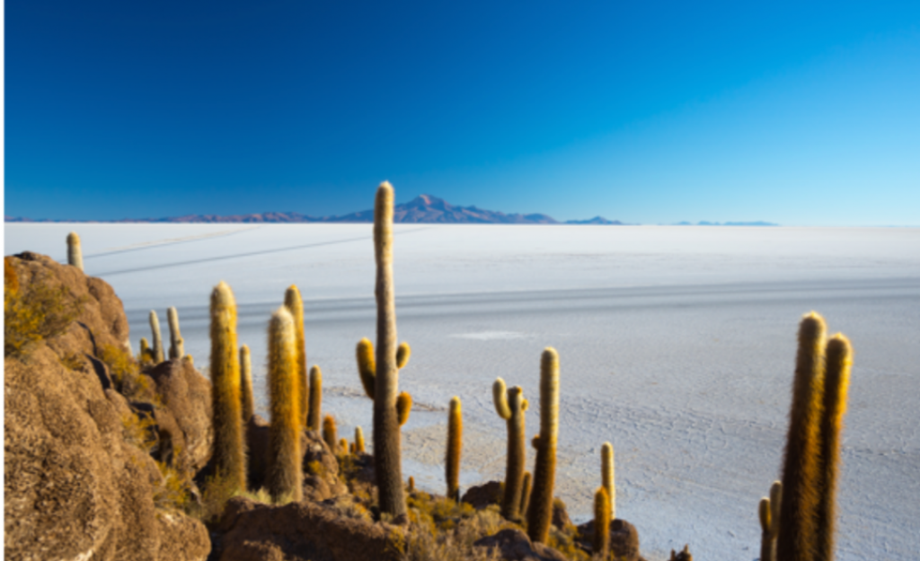 Cactusisland-uyuni