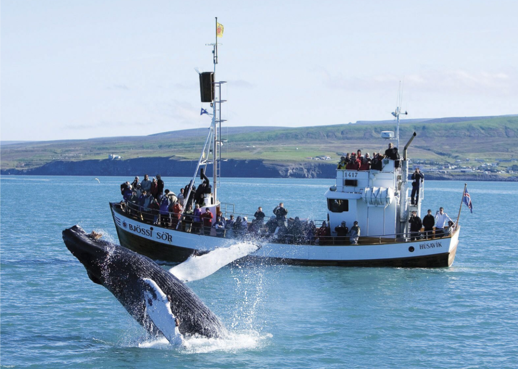 Icelandincentivetravelwhalewatching-1-1024x770